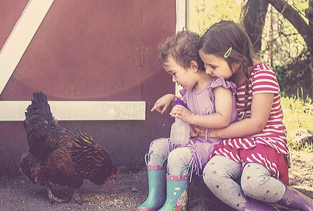 two girls looking at a chicken