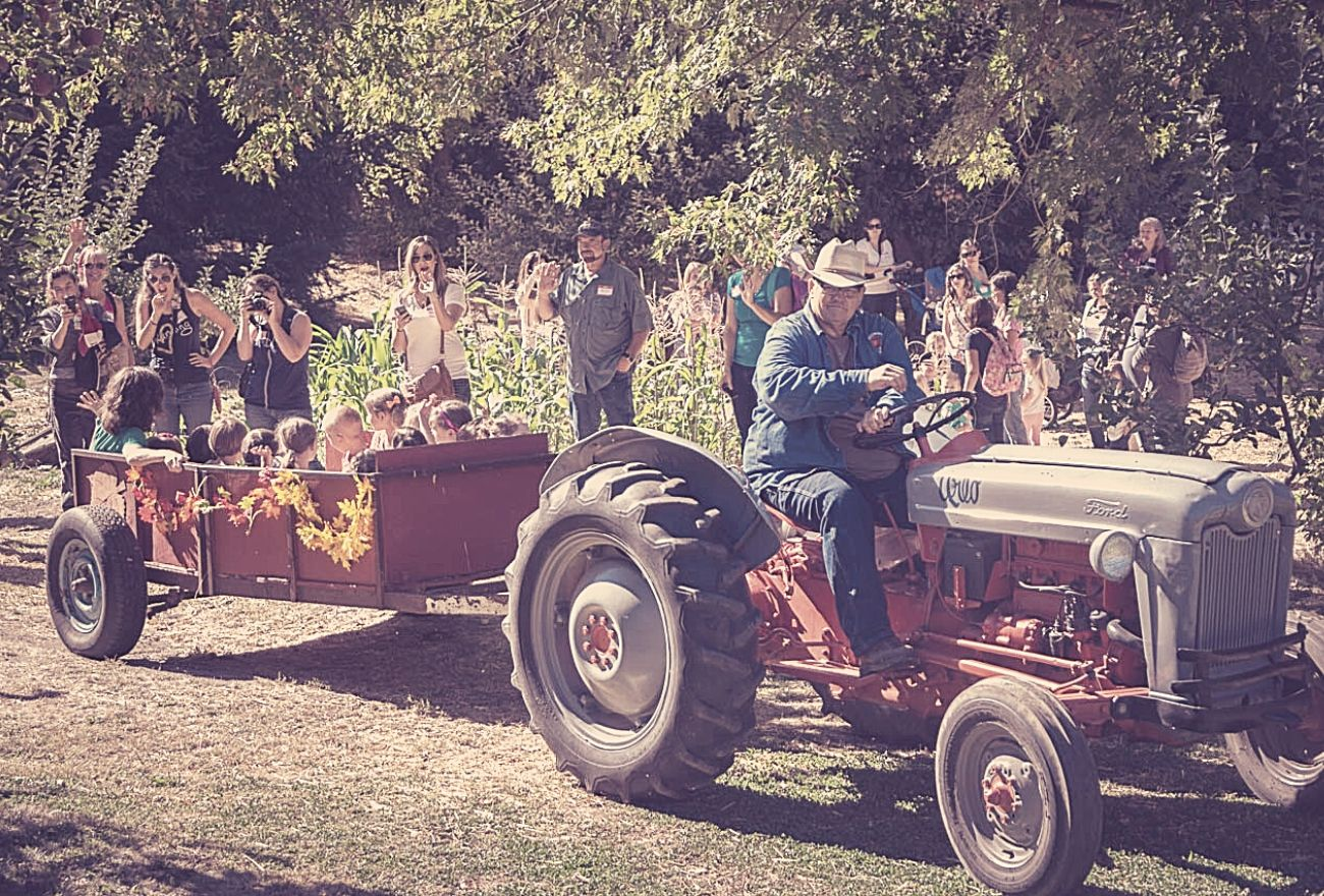 man driving tractor pulling kids in a trailer while parents watch