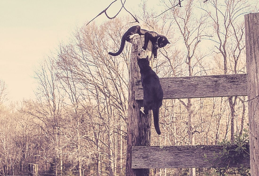 two black and white cats playing on a fence post