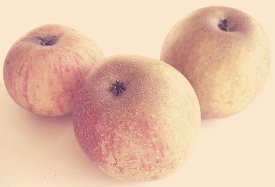 Seek No Further apples